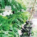 The W Bali – Seminyak's New Chefs Garden