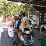 SOS continues support for Travelling Dog Man