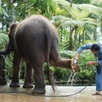 Bali sets a World Standard for Animal Welfare & Conservation